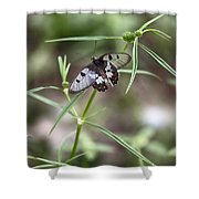 Glass-wing Butterfly Shower Curtain