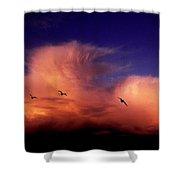 Glaucous-winged Gulls Larus Glaucescens Shower Curtain