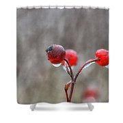 Glazed Shower Curtain