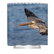 gliding by Pelican Shower Curtain