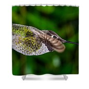 Gliding Hummingbird Shower Curtain