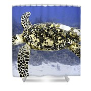 Gliding Sea Turtle Shower Curtain