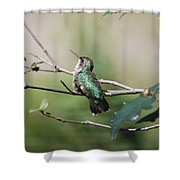 Glistening Hummer Shower Curtain