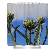 Globe Artichokes Shower Curtain