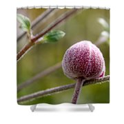 Globe Flower Bud Before The Bloom Shower Curtain