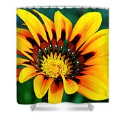 Glorious Day Yellow Flower By Diana Sainz Shower Curtain