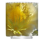 Glorious Dragon Fruit In Full Bloom Shower Curtain
