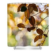 Glorious Foliage. Tree In Pamplemousse Garden 1. Mauritus Shower Curtain
