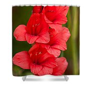 Glorious Glads Shower Curtain