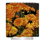 Glorious Golden Mums Shower Curtain