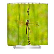 Glorious Golden-winged Shower Curtain