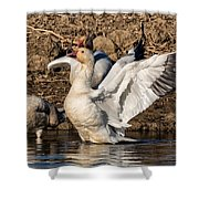 Glorious Snow Goose Shower Curtain