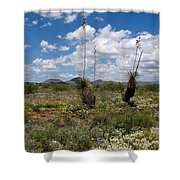 Glorious Spring In The Desert Shower Curtain
