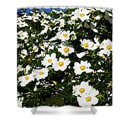 Glorious White Roses Db Shower Curtain