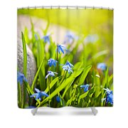 Scilla Siberica Flowerets Named Wood Squill  Shower Curtain