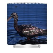 Glossy Ibis Shower Curtain
