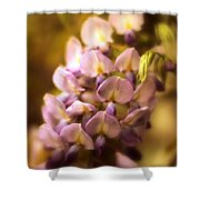 Wisteria Afterglow Shower Curtain