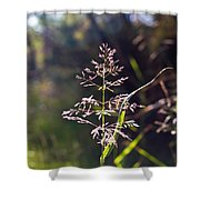 Glowing Grass In Palo Duro Canyon 100613.02 Shower Curtain