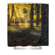Glowing Maples Square Shower Curtain