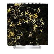 Glowing Orchids Shower Curtain