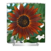 Glowing Red Sunflower Shower Curtain
