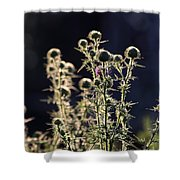 Glowing Thistle - 2 Shower Curtain