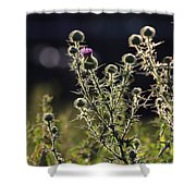 Glowing Thistle - 1 Shower Curtain