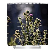 Glowing Thistle - 3 Shower Curtain
