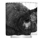Gluttony  Shower Curtain