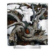 Gnarled Cone Shower Curtain