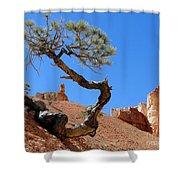 Gnarled Pine In Bryce Canyon Utah Shower Curtain