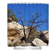 Gnarly Joshua Tree Shower Curtain