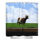 Goat On A Sod Roof In Sister Bay In Wisconsin Shower Curtain