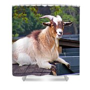 Goat On The Roof Shower Curtain