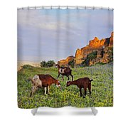 Goats In Fes Shower Curtain