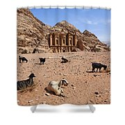 Goats In Front Of The Monastery At Petra In Jordan Shower Curtain