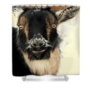 Goatstache Shower Curtain