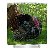 Gobble Gobble Shower Curtain