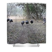 Gobblers Shower Curtain