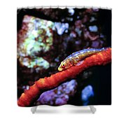 Gobys 7 Shower Curtain