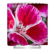 Godetia Pink And White Flower Shower Curtain
