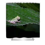 God's Tiny Tree Frog Shower Curtain