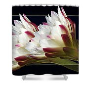 God's Trumpets Shower Curtain