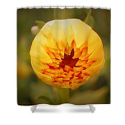 Godsend Sunshine Shower Curtain