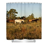 Going For A Stroll Shower Curtain