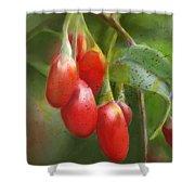 Gojo Berries Shower Curtain