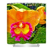 Gold And Pink Orchid At Maerim Orchid Farm In Chiang Mai-thailan Shower Curtain