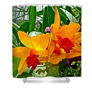 Gold And Red Orchids At Maerim Orchid Farm In Chiang Mai-thailan Shower Curtain