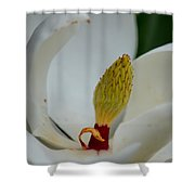 Gold Centered Magnolia Shower Curtain