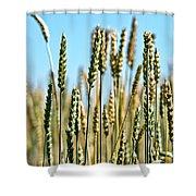 Gold Harvest Blue Sky Shower Curtain